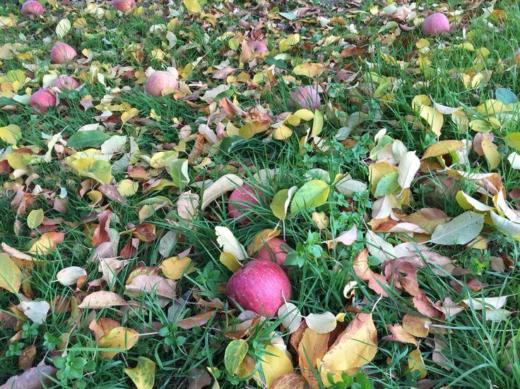 福島のりんご畑にて