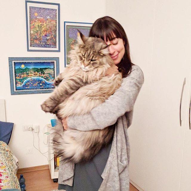 Ho trovato il gatto che mi fa cambiare idea sui gatti: è grande come un cane! #mainecoon