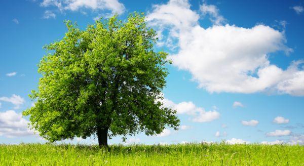 Analizziamo questo studio interessante condotto dalle Università dell'Illinois e di Hong Kong che indica sul come guardare alberi possa ridurre lo stress.