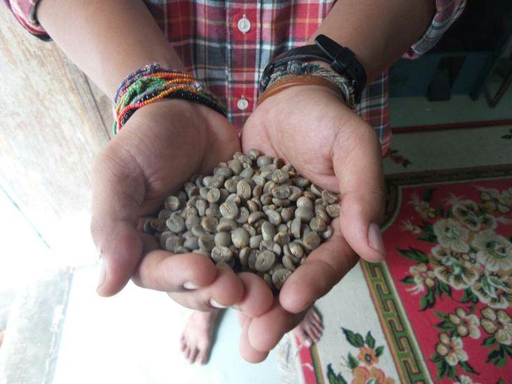 Kalo ini green beans dari Desa Bunjo Ambacang Nagari Lasi Sumatra barat.  #MinangCoffee