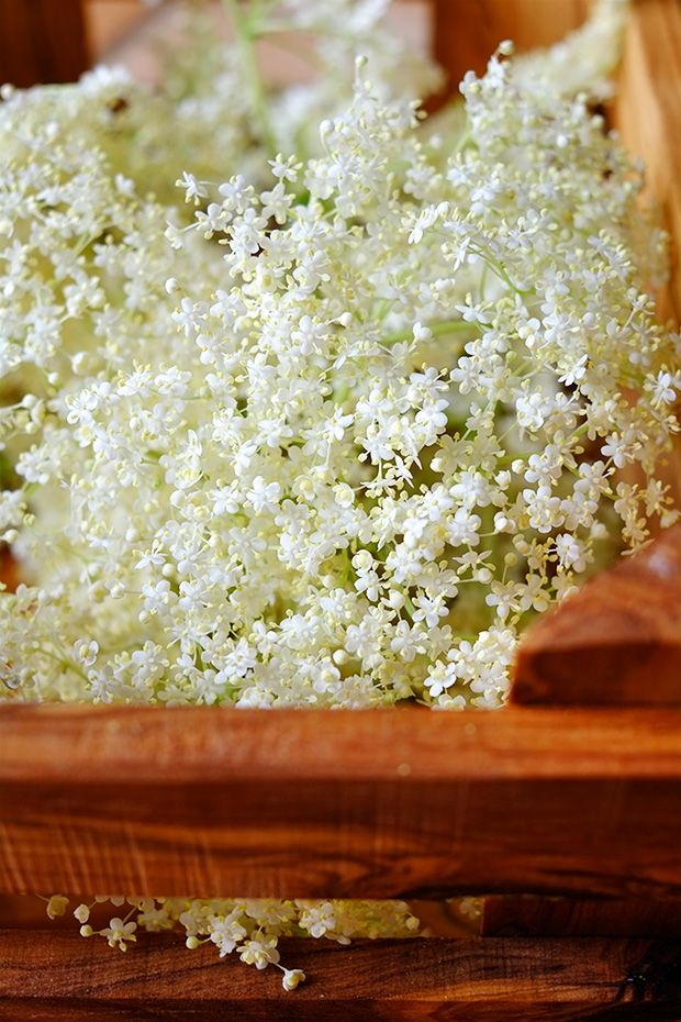 Fiori di sambuco (e sciroppo) - GranoSalis - Blog di cucina naturale e consapevole