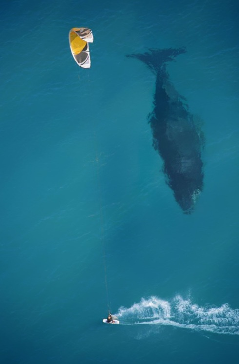 """""""Shadow of a beast"""". Great shot! (Aerial photography)"""