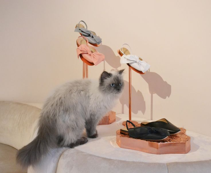 """I'm feeling very french today. Marie Antoinette slingback shoes has that effect on me"" by Rukas, the cat. #JosefinasCatSeries"