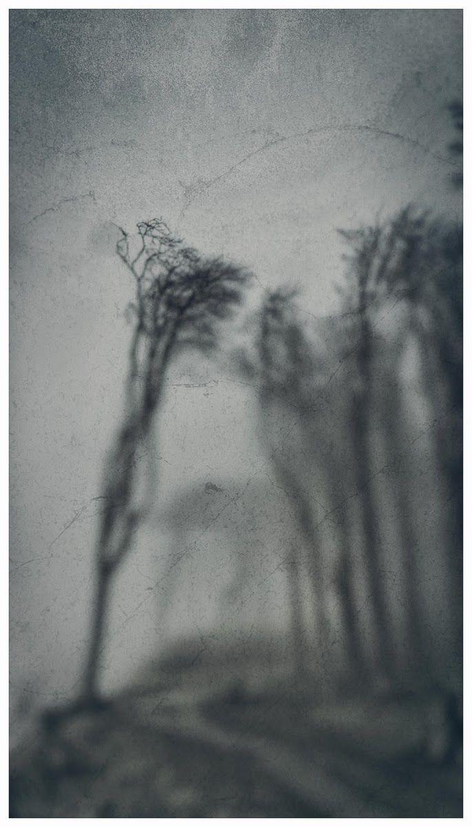l'autre hidalgo: L'arbre se mit à applaudir & siffler - Arno Schmid...