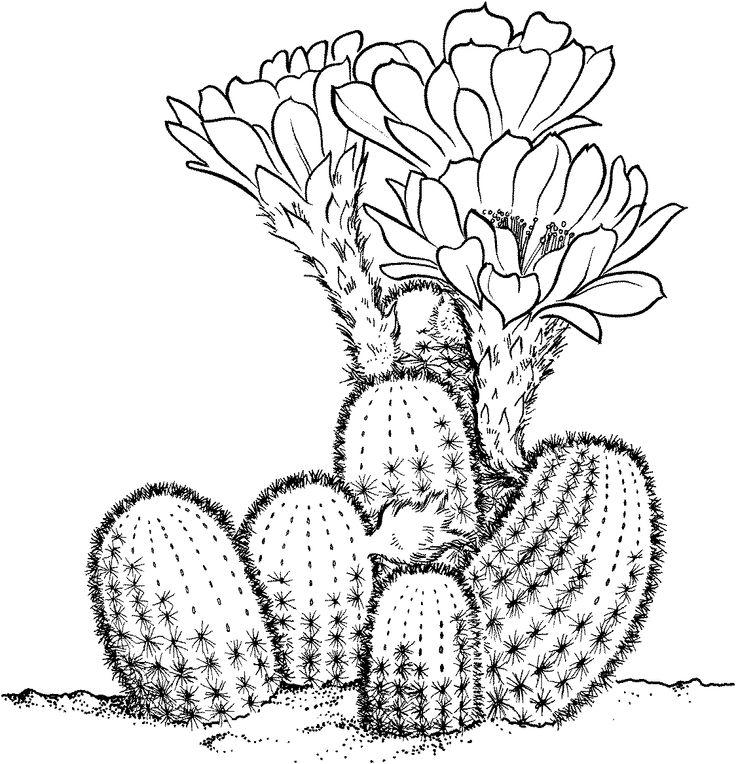 dessin de cactus - dessins  u00e0 colorier