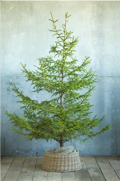 Christmas tree au naturel