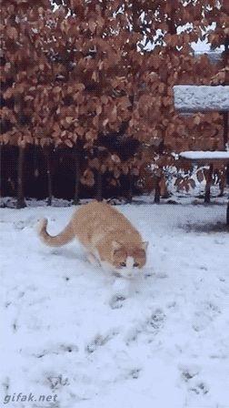 【gif画像】雪球をジャンプでキャッチするにゃんこ
