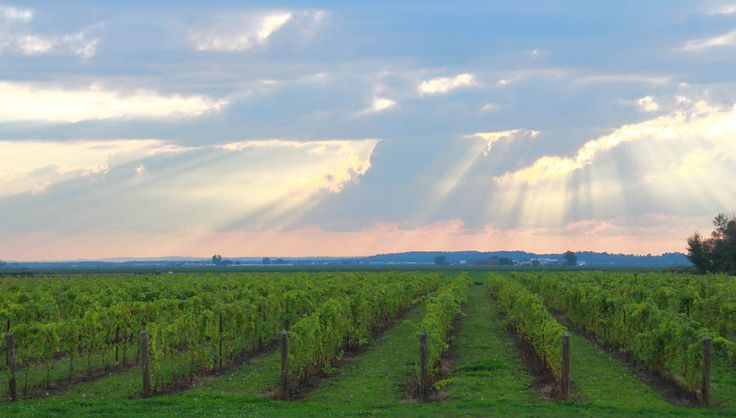 Eight Great Day Trips for Wine Lovers