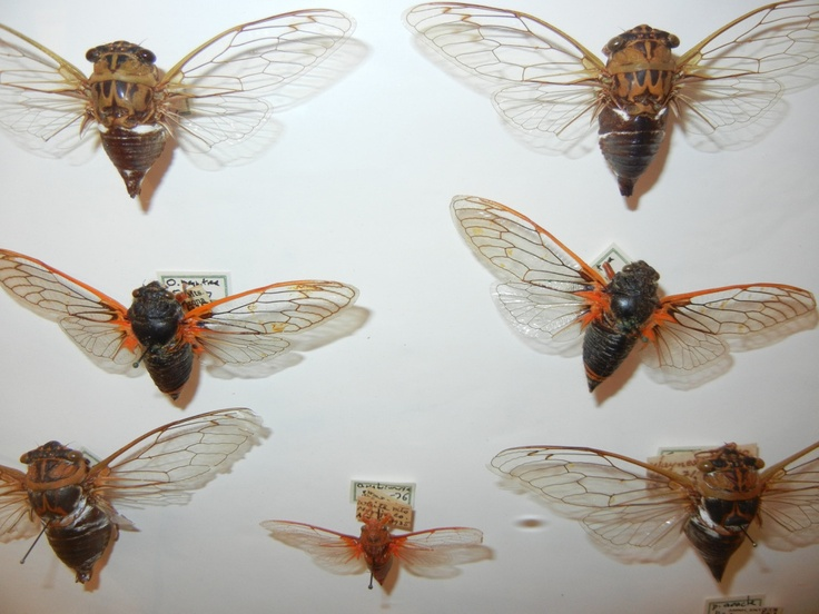 How-To: Collect and Display Insects | MAKEzine