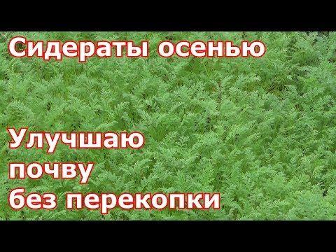 """МОЙ СУПЕР СПОСОБ РАЗМНОЖЕНИЯ КЛУБНИКИ!!!ВЫБИРАЕМ """"ЖЕНСКИЕ"""" РОЗЕТКИ! - YouTube"""