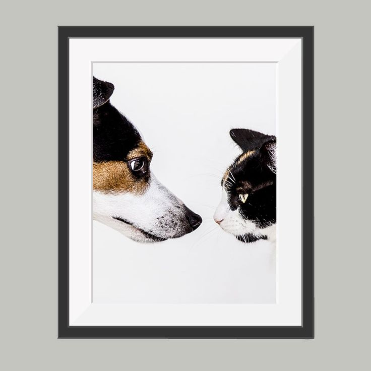 hond en kat poster