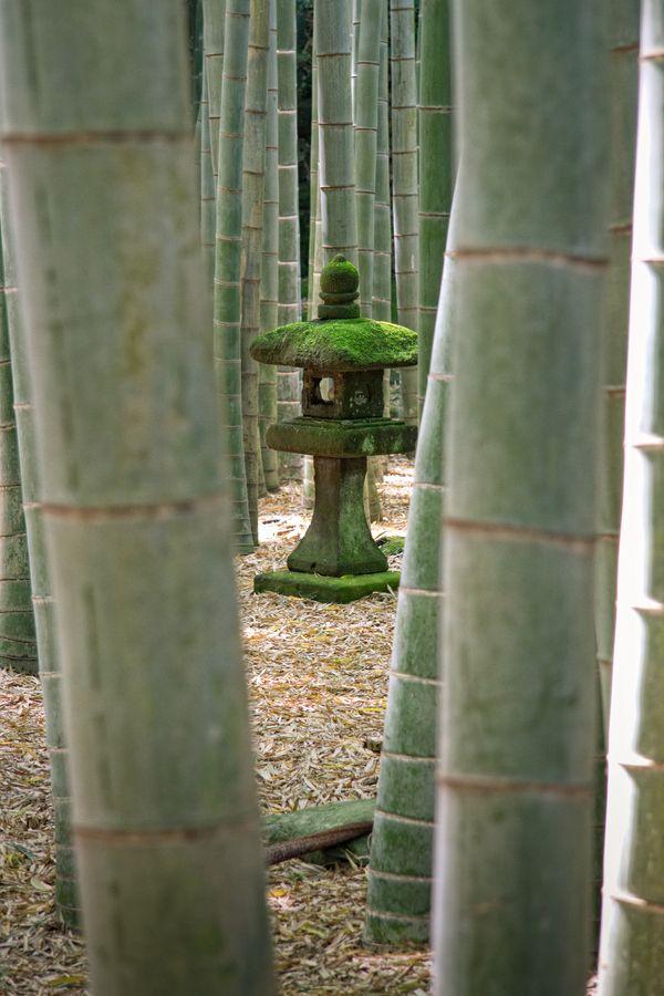 Kamakura #japanese #garden