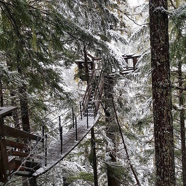 Journey through #Whistler's rainforest canopy on one of our  TreeTrek Tours - a true family favourite! .  #ZiptrekLife photo by @emmmnics  .  .  .  #OnlyInWhistler #ecotourism #explorebc #pnw #explorecanada #lifeofadventure #adventuretravel #beautifulbc #rainforest #winterwondlerland #nature