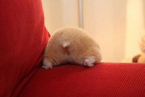 what a cute little bottom.