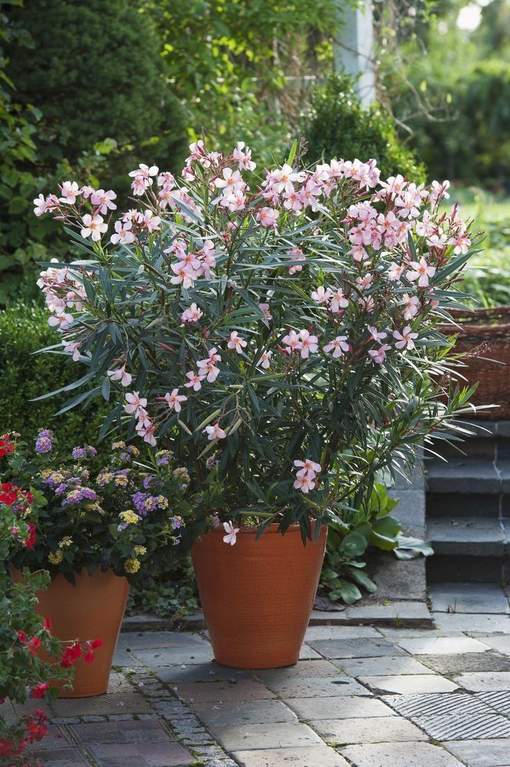 Garten Im Mai Das Ist Jetzt Zu Tun Das Haus Kubelpflanzen Pflanzen Garten
