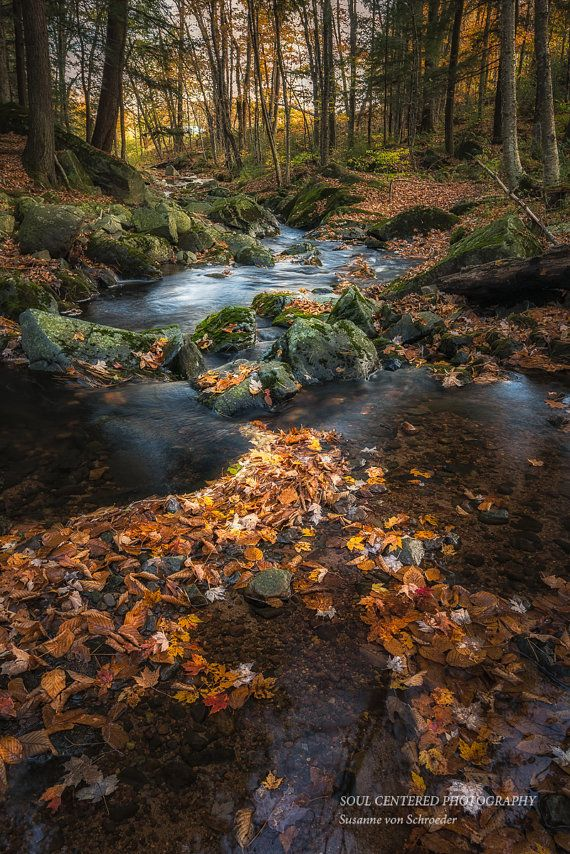 Autumn Photography Woodland Creek by SoulCenteredPhotoart on Etsy