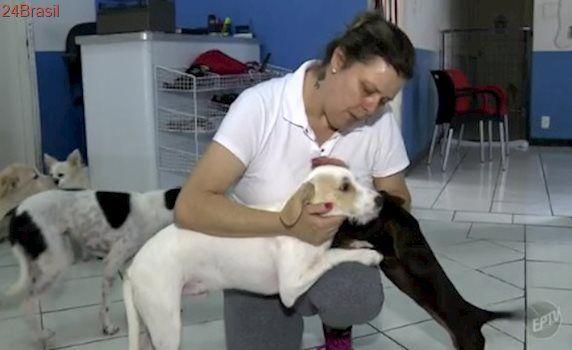 Crime: tutores abandonam animais em pet shops e clínicas de Campinas
