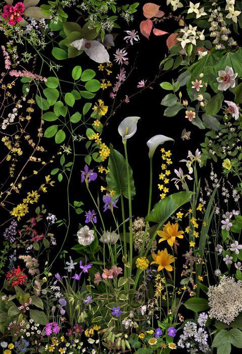 「薬草:有用植物」 Copyright : Araki Katsumi