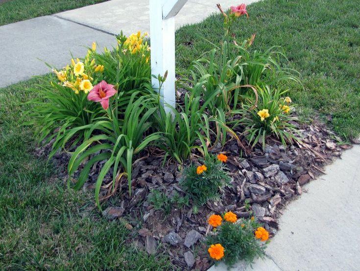 Flowers around the mailbox
