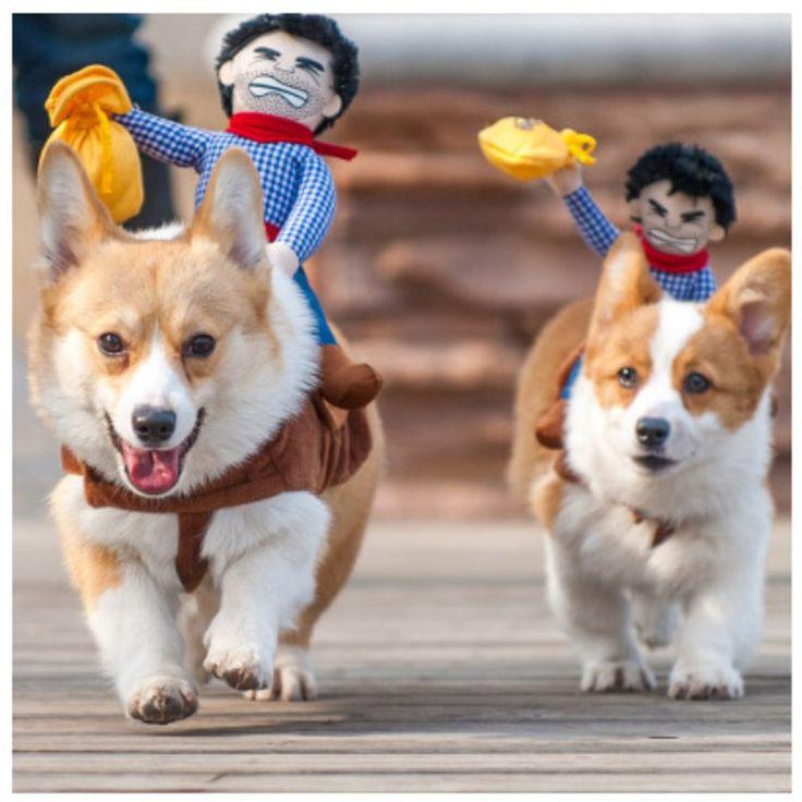 fashion riding horse pet dog clothes novelty funny halloween dog costume large dog clothes cowboy