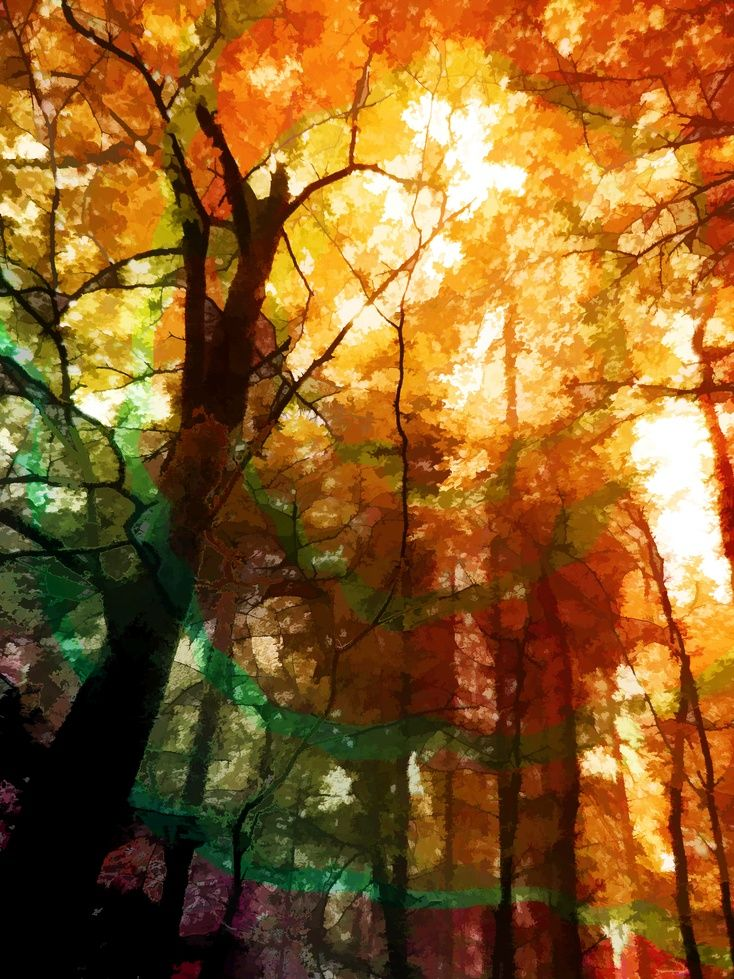 ARTFINDER Autumn Glory by Christopher West - Looking up into a canopy of trees you & 16 best Painting Trees images on Pinterest | Painting trees ...