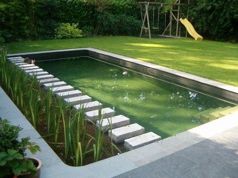 Zwemvijver (met erg helder water) met moeraszone langs zijkant