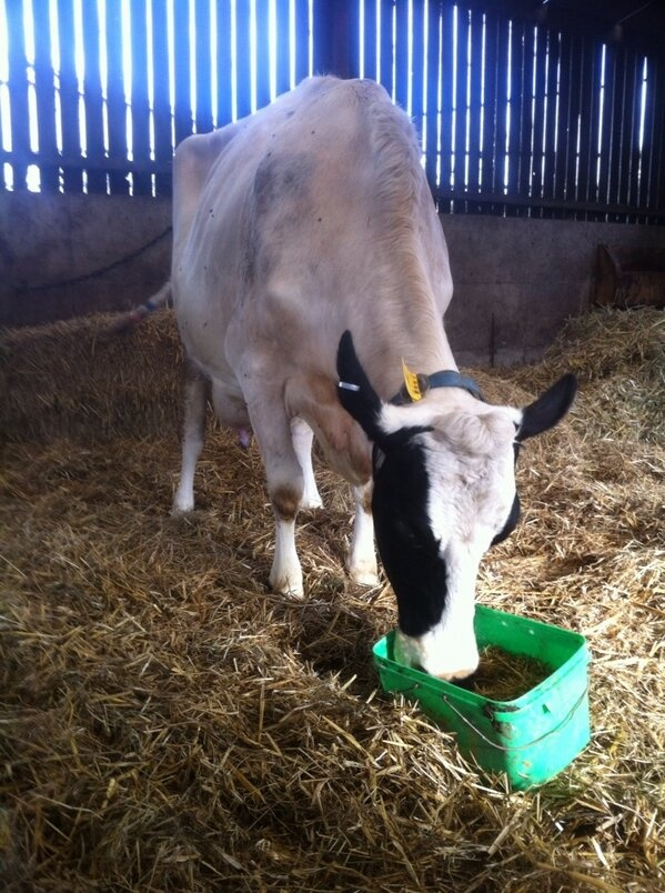 This Pearson Design was a small trough to monitor intakes on a sick cow. Thanks @Sambrondanw via #agrichatuk