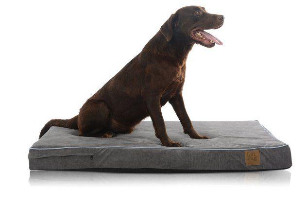 LaiFug Orthopedic Memory Foam Dog Bed | Orthopedic Dog Bed | Orthopedic Dog Bed Reviews