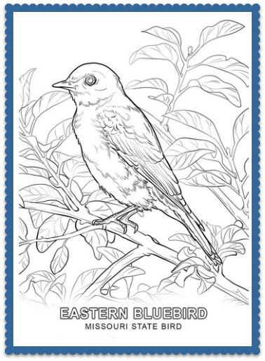 Missouri State Bird Coloring Page