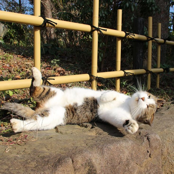 Sunbathing. Not even once. - Album on Imgur