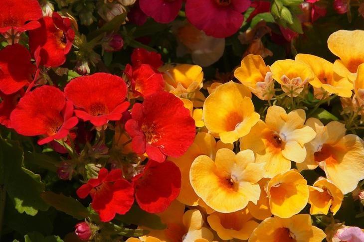 14 Magníficas De Otoño Flores Para Tu Jardín | Naturaleza - Todo-Mail