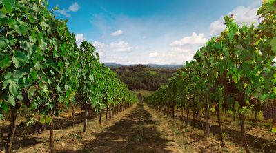 #tuscanycook #vineyard #tours come to visit us in the heart of Tuscany www.tuscanycook.com