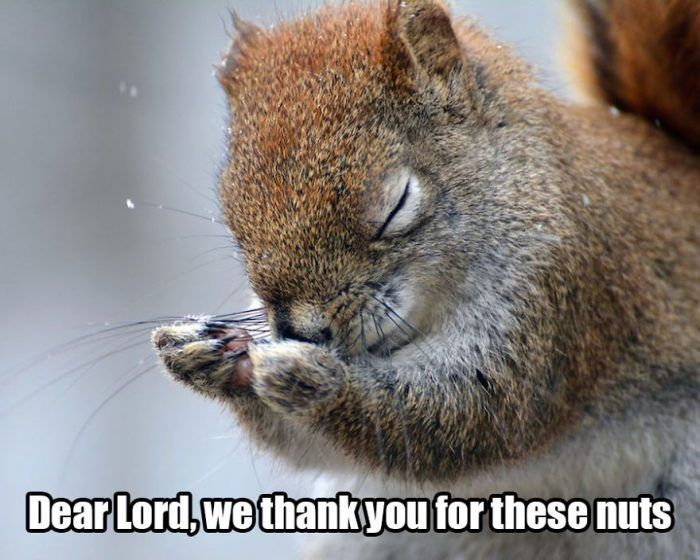 Funny Squirrel quotes with Caption | Comedy wildlife photography, Animals,  Wildlife photography