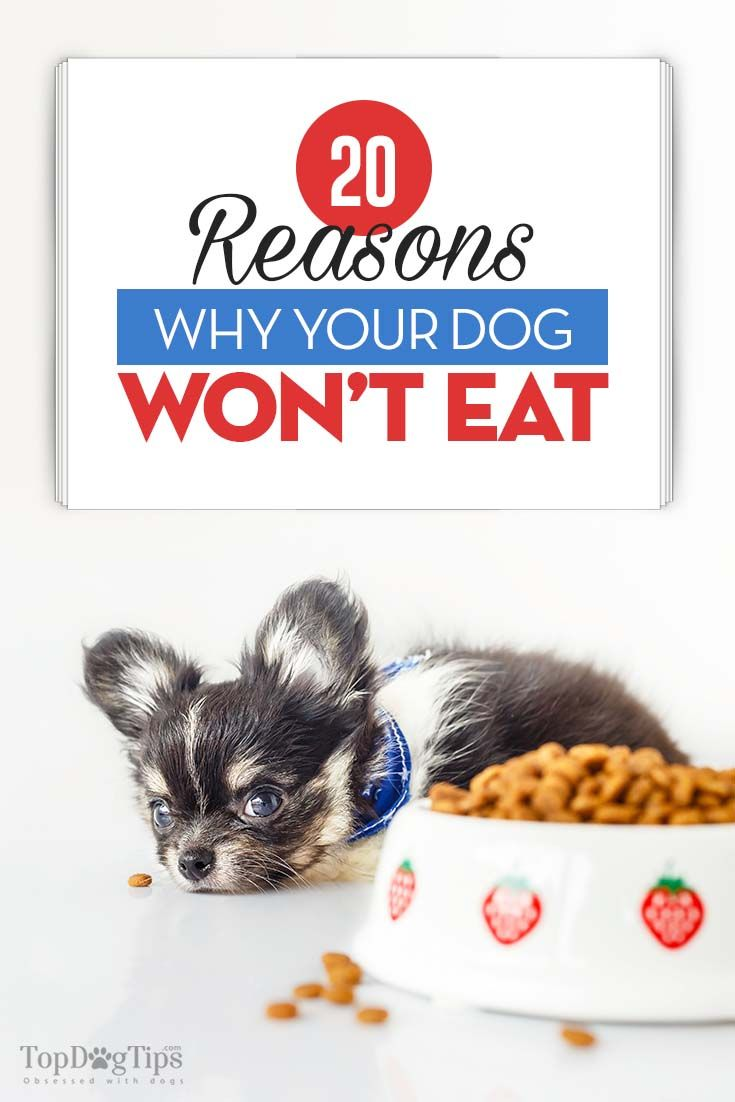 20 Reasons Why Your Dog Won T Eat Or Drink Dog Food Recipes
