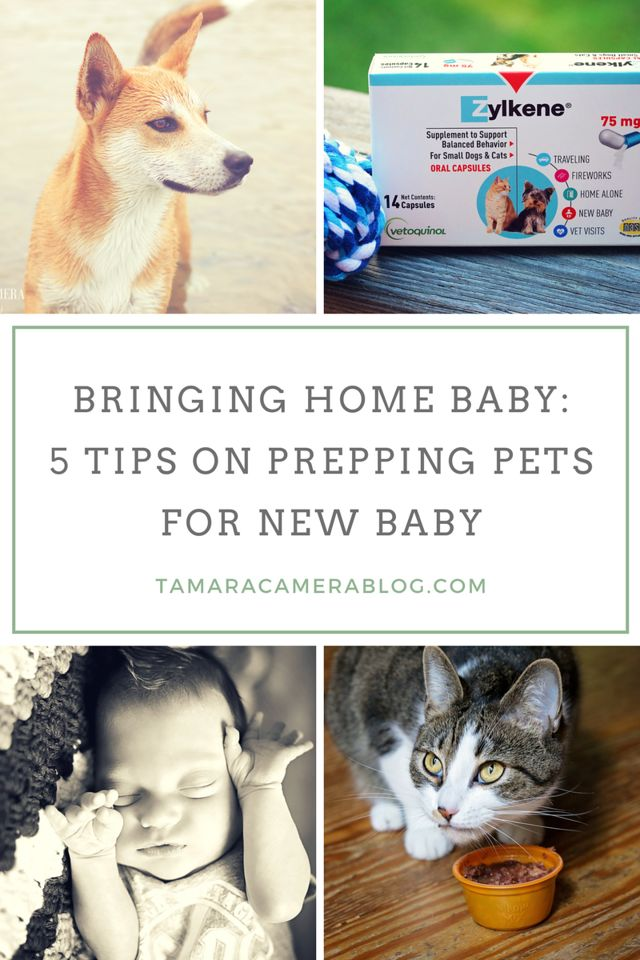 Bringing Baby Home To Multiple Dogs