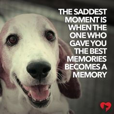 Do Dogs Ever Get Over It When Their Owner Dies