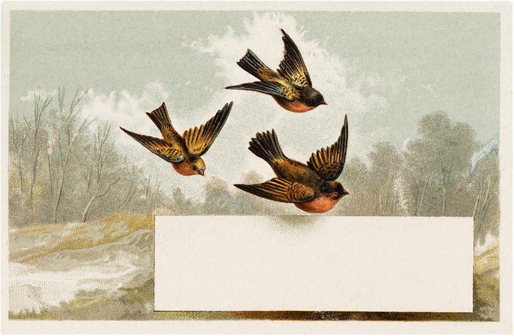 The Graphics Fairy: bird label