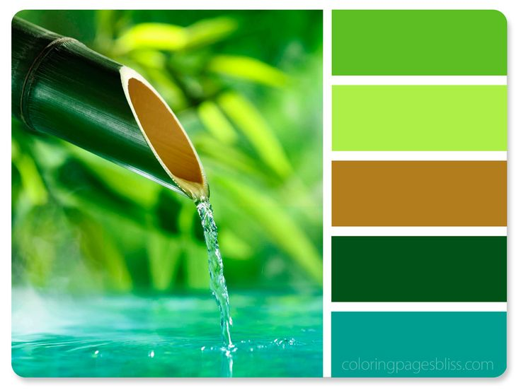 Nature Inspired Color Palettes                                                                                                                                                                                 More