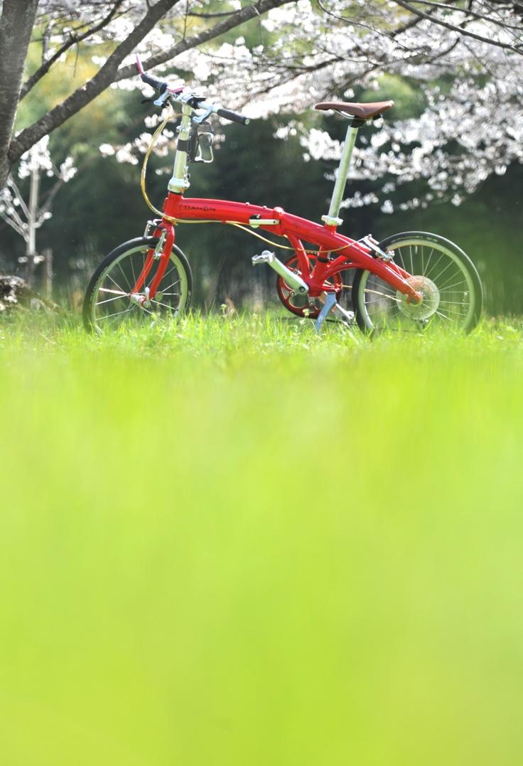 ©ぴっち大好きさま / Mu P8 2011年 / 「ソメイヨシノ、グリーンの芝に浮かび上がるdahon(岐阜県瑞穂市)」2013/4/24撮影 70-200ズーム 1600分の1 F4.5