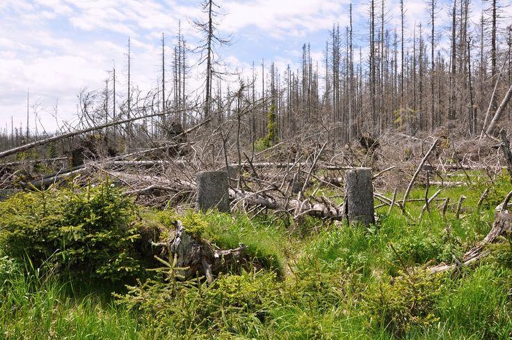 Обилие насекомых-вредителей в тайге связано с изменением климата