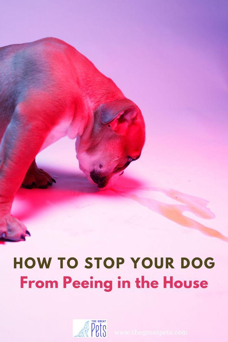 Puppy Biting Spray in 2020 Dog pee on carpet, Dog