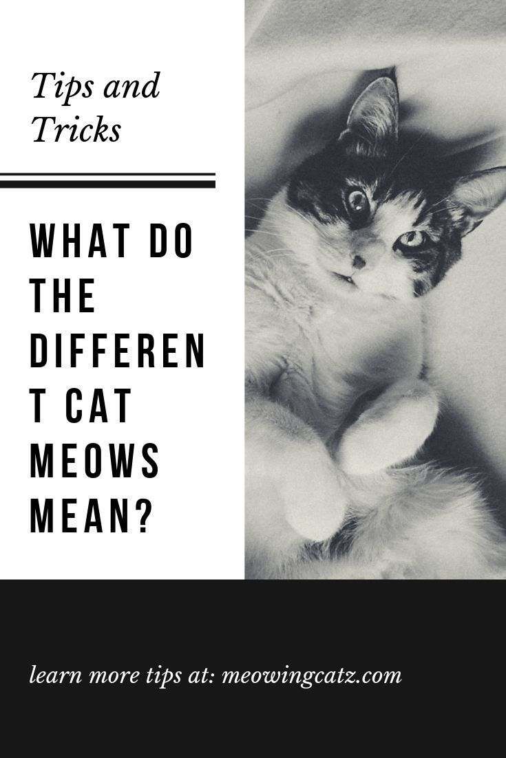 Why Does My Cat Keep Meowing What Do Cats Mean When They Meow Meowingcatz Cat Cats Kittens Cat Meow Meaning Cat Care Kitten Meowing