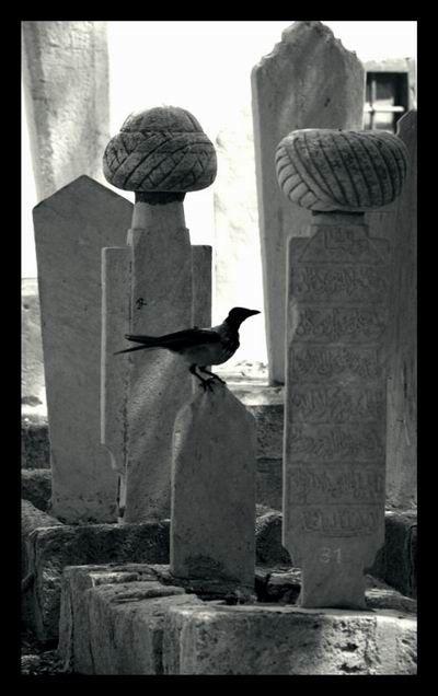 Murat Reis' cemetery