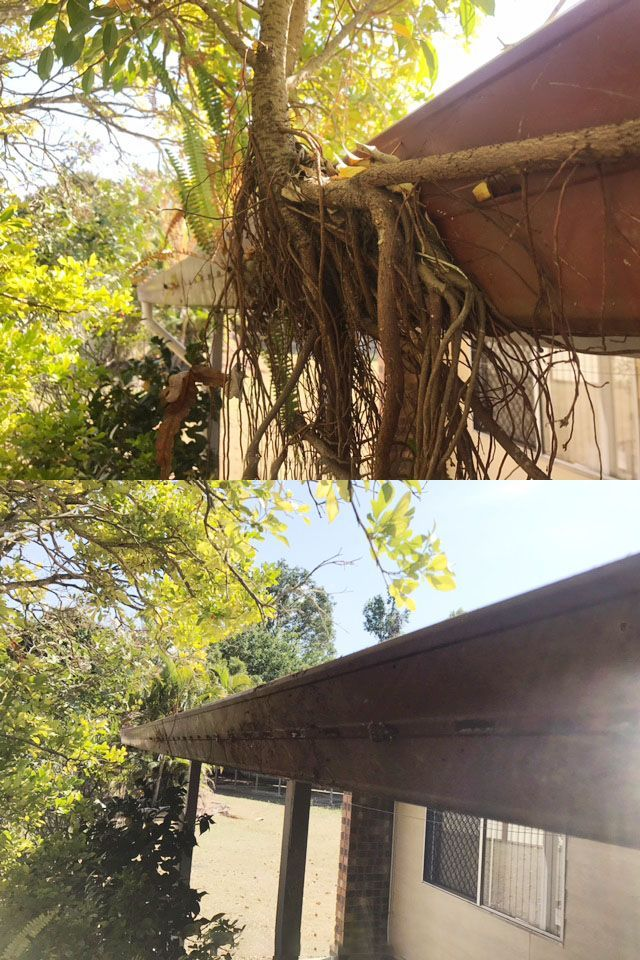 If your gutters have plants growing in them, then they are well overdue for a clean 🌱 Not only are gutter growths unattractive, but the weight and speed of the growth can cause irreparable damage to your gutters 🏡🍃💦