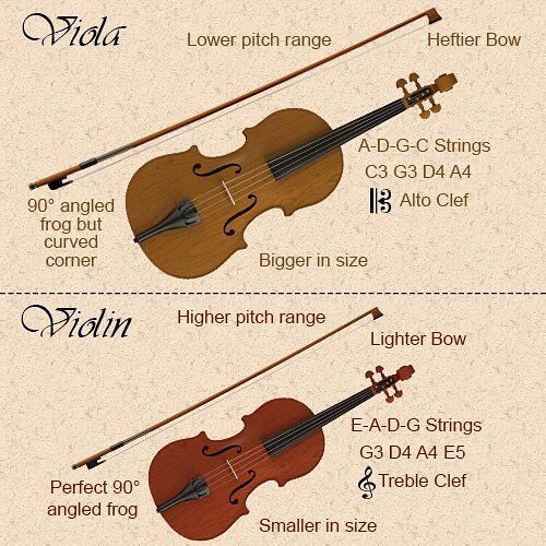 DIFFERENCES IN PLAYING THE VIOLIN AND VIOLA As I mentioned earlier the viola and violin are played in a similar manner. The main difference is that the viola is slightly larger meaning that you must place your fingers slightly farther apart when playing viola than on the violin. Since the instrument is larger is it also heavier and requires thicker strings and heftier bows. Viola bows generally weigh anywhere from 69 to 74 gramsabout 10 grams heavier than violin bows. One way to tell a viola…