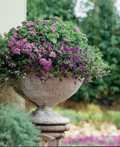 The simple grey urn is a good foil for the purple & green plants.