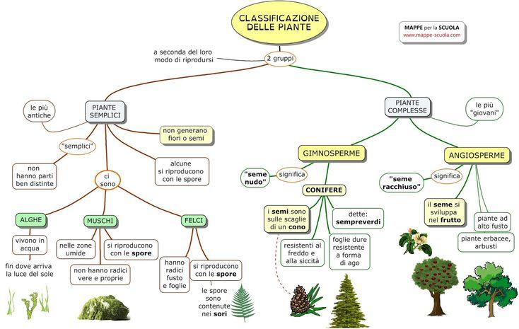 Mappa sulla CLASSIFICAZIONE DELLE PIANTE  (scuola primaria)  Piante semplici : alghe, muschi e felci; piante complesse : gimnosperme (conife...