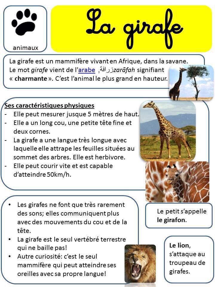 La girafe carte d'identité                                                                                                                                                      Plus