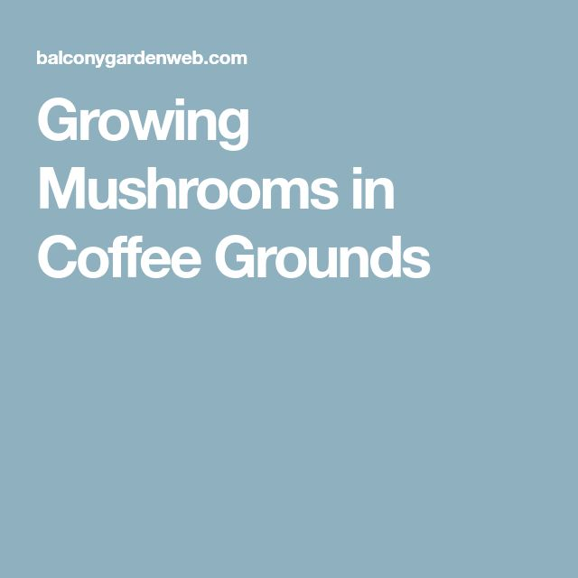 Best 25 Growing Mushrooms Ideas On Pinterest Growing Mushrooms At Home Oyster Mushroom