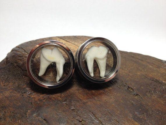 "1""  Ear Gauge Real Animal Tooth Ear Gauges, 1"" Ear Plugs, Taxidermy Jewelry, Animal Bone Jewelry 1 Gauge"